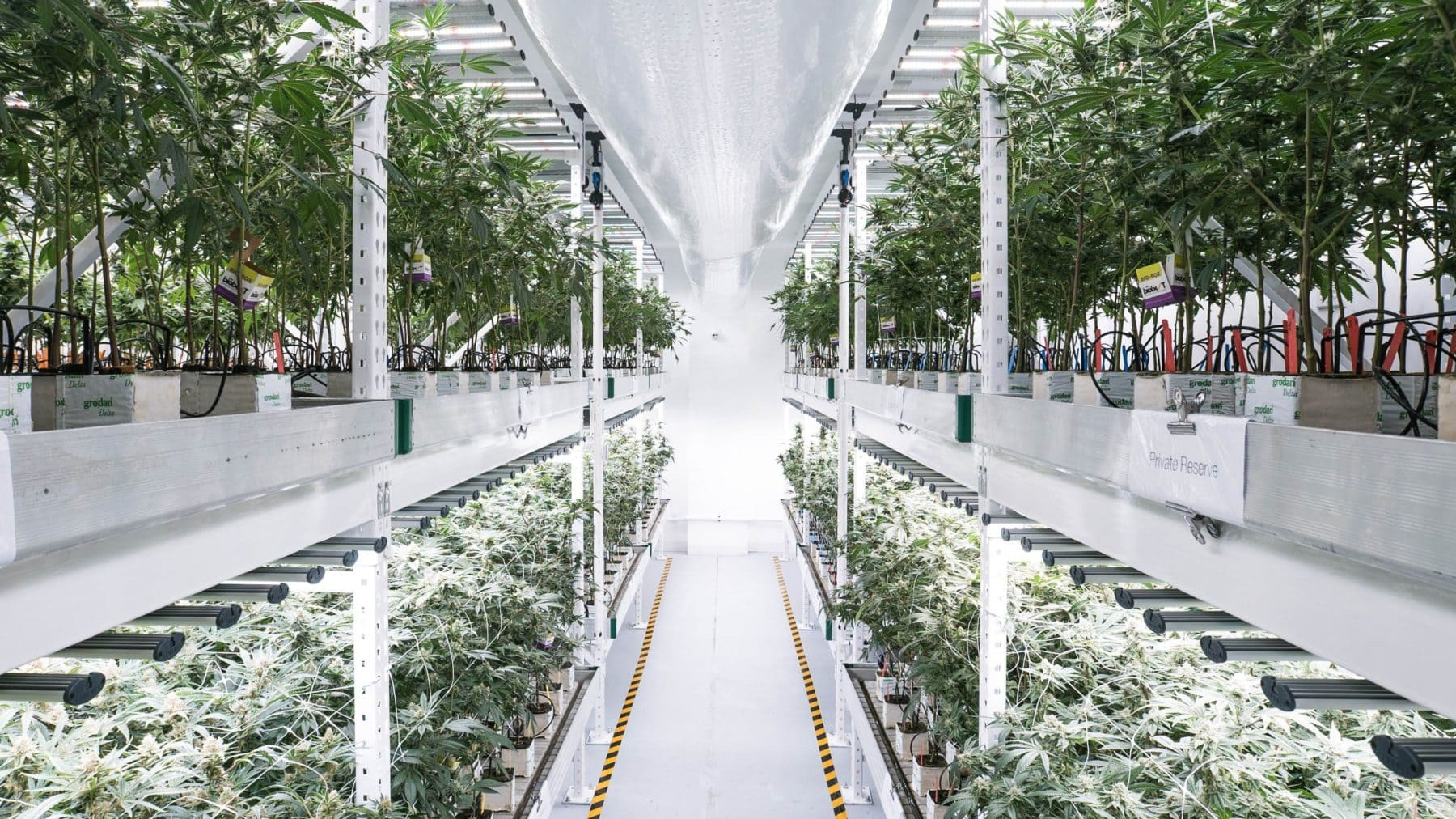 Cannabis Vertical Farm - medmen - spydrx plus
